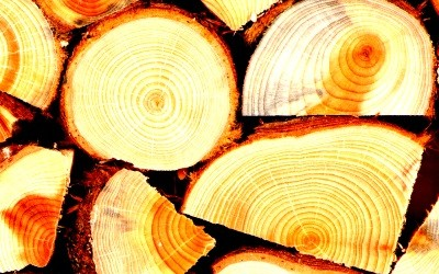 Logs for Sale 2017-18